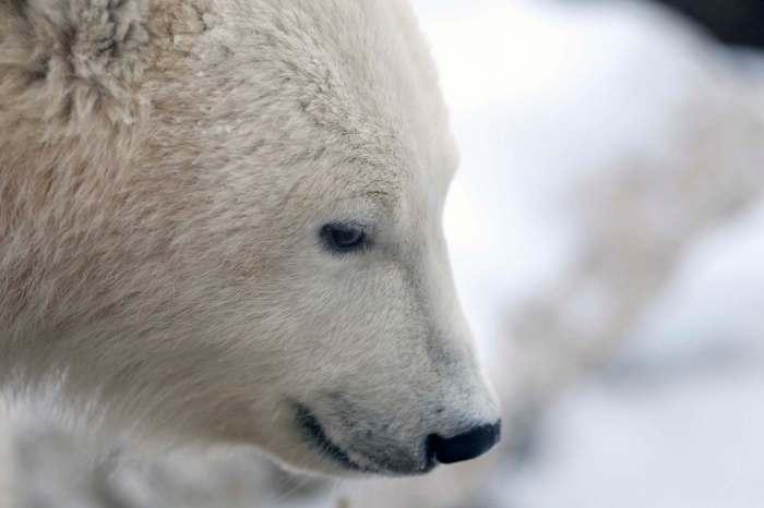 151130- bear 02.jpg